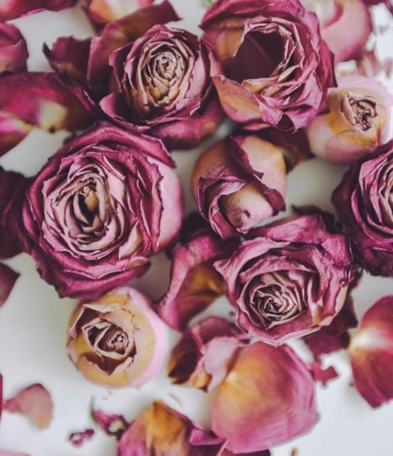 džiovintos rožės